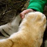 Paw to hand