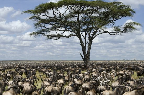 Africa is travel ready: Great Migration in East Africa