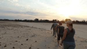 Rhinos on a walking safari in Zambia