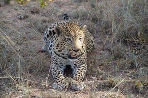Aufnahme von Jan Suhr: im Sabi Sand Game Reserve