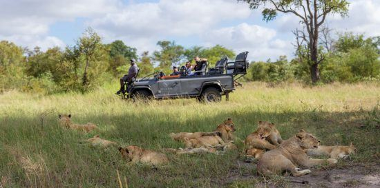 Safari experience in South Africa