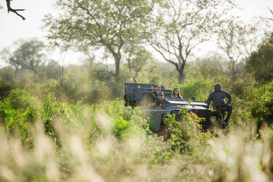 Covid-19-Zahlen in Südafrika: Pirschfahrt in der Krüger-Region