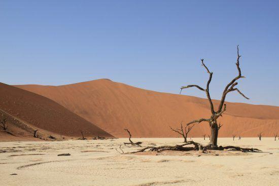 Das Deadvlei in Namibia