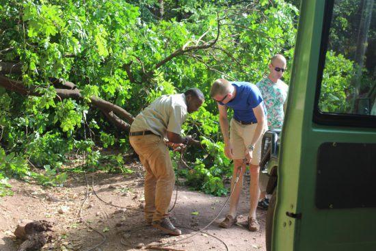 Manuela und Kollegen helfen beim Entfernen eines Baums