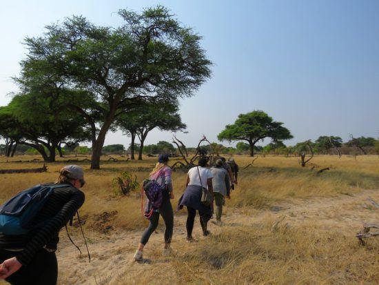 Safari à pieds au parc national de Hwange