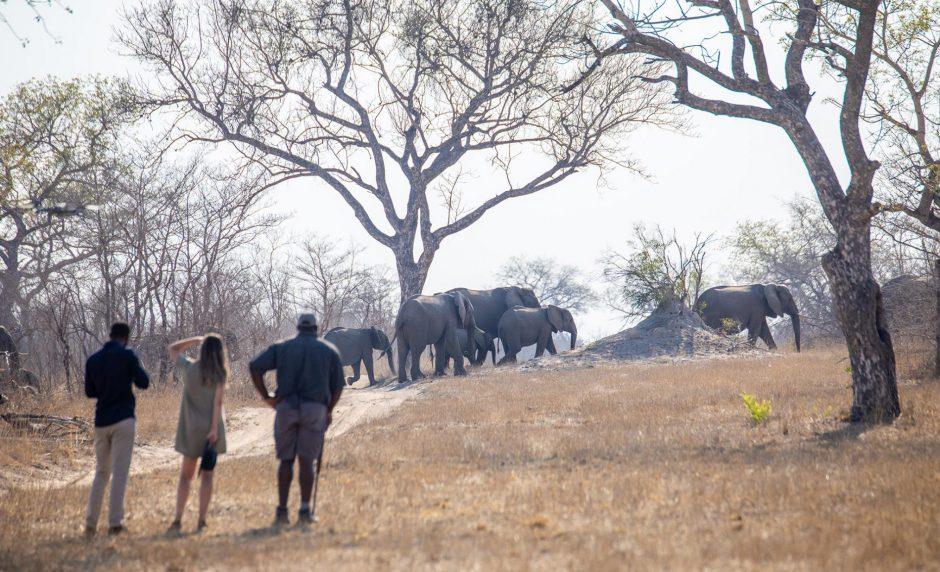 Promenade guidée à travers la nature sauvage de l'Afrique