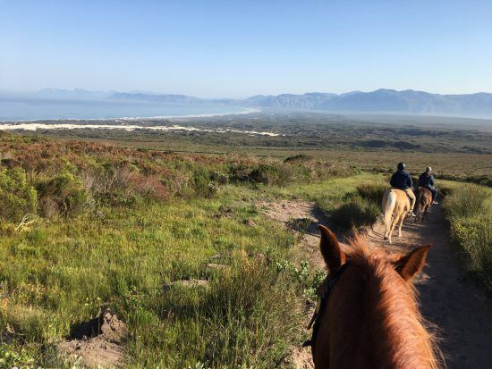 Promenade à cheval à Grootbos
