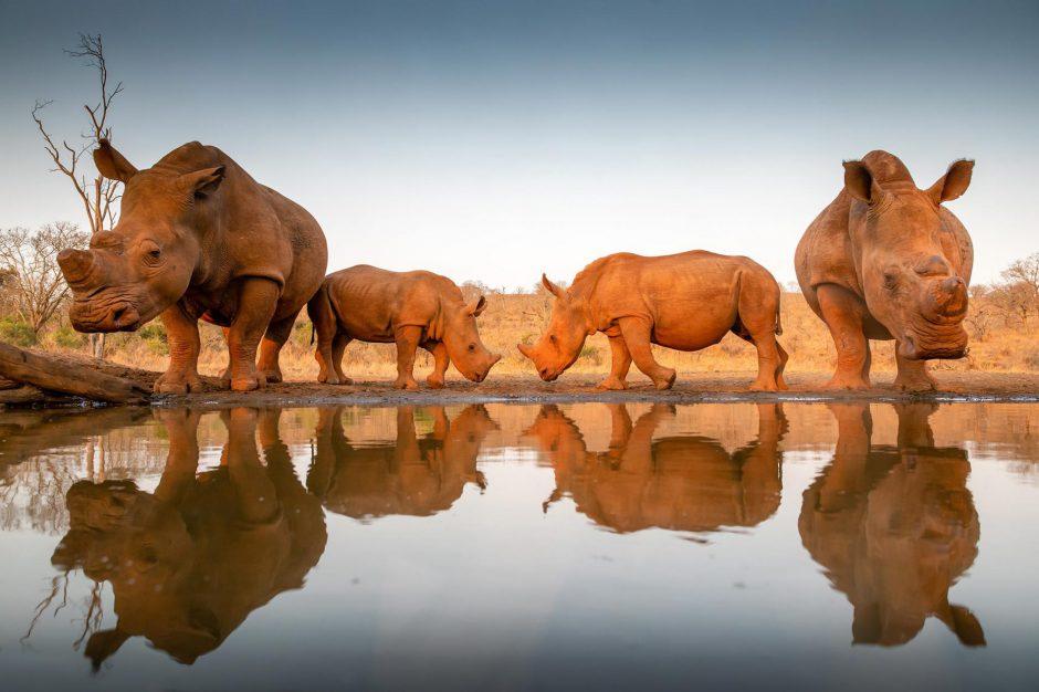 Nashörner rund um ein Wasserloch