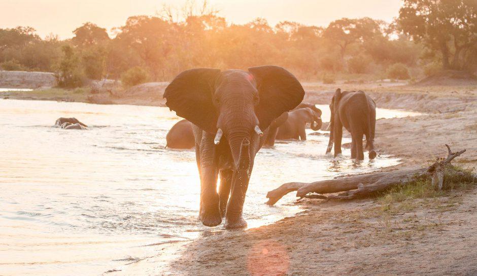 Des éléphants majestueux à un point d'eau