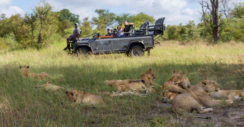 African safari socially distant