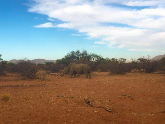 Dernier safari pour finir notre séjour en toute beauté